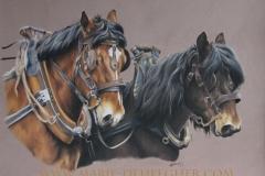 chevaux au travail