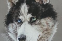 douchka-husky